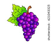 grapes drawing. isolated on... | Shutterstock .eps vector #621043325