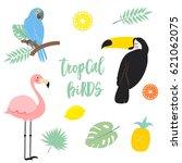 vector tropical elements on...   Shutterstock .eps vector #621062075