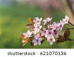 spring blossom bloom tree flower | Shutterstock . vector #621070136
