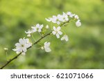 apple flowers in the tree | Shutterstock . vector #621071066
