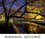 cherry blossoms night view in... | Shutterstock . vector #621113642