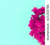 Tropical Flowers Fuchsia....