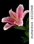 Lily Flower On Black Backgroun...
