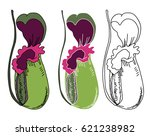 hand drawn nepenthes vector   Shutterstock .eps vector #621238982