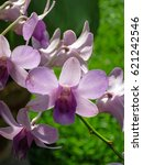 Light Purple Dendrobium Orchid...