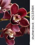 Purple Orchid Isolated On Blac...