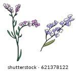 hand drawn statice or limonium...   Shutterstock .eps vector #621378122
