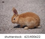 Small photo of Orange bunny
