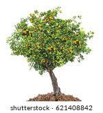 Citrus Tree On White Background