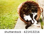 Stock photo tired kitten sleeping in shadow resting on its back in funny position hidden in vintage wicker 621413216