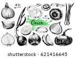 onion hand drawn graphic set.... | Shutterstock .eps vector #621416645