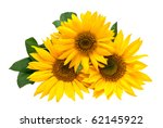 Sunflowers  Isolated On A Whit...
