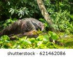 giant anteater | Shutterstock . vector #621462086