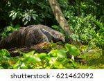 giant anteater | Shutterstock . vector #621462092