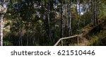 in a birch grove | Shutterstock . vector #621510446
