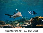 Underwater Life. Photo With...