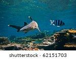 Underwater Life. Photo With...