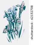 iris flowers | Shutterstock .eps vector #62152708