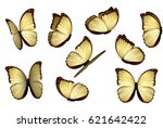 Stock vector set colorful isolated butterflies 621642422