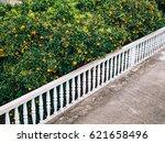 orange mandarin on the tree.... | Shutterstock . vector #621658496