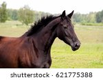 portrait of black horse at the... | Shutterstock . vector #621775388