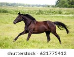 beautiful dark horse running... | Shutterstock . vector #621775412