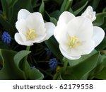 White Tulips And Liriope...