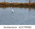 a great egret stands alone in... | Shutterstock . vector #621799082