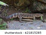 lizard   Shutterstock . vector #621815285