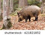 wild boar  | Shutterstock . vector #621821852