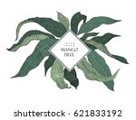 mango tree vintage illustration.... | Shutterstock .eps vector #621833192