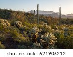 Organ Pipe Cactus National...