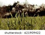 abstract long blades of grass ... | Shutterstock . vector #621909422