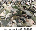 Small photo of Dried Coca leaves as background. In Peru coca leaves are drunk as tea or traditionally chewed in the mountains to help against altitude sickness.