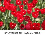 istanbul  tulips   Shutterstock . vector #621927866