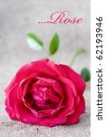 One pretty rose on a rough fabric - stock photo