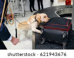 drug detection dog at the... | Shutterstock . vector #621943676
