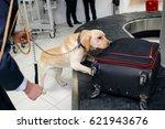 drug detection dog at the... | Shutterstock . vector #621943676