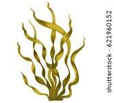 Brown Seaweed  Kelp In The...