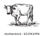 sketches of cows drawn by hand. ... | Shutterstock .eps vector #621961496