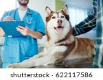 Stock photo husky dog lying on vet table with doctor and master near by 622117586