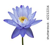 Water Lily Isolated On White...