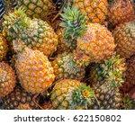 heap of fresh pineapple fruits... | Shutterstock . vector #622150802