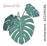 set of vector tropical leaves. | Shutterstock .eps vector #622190186