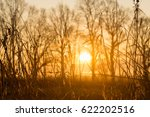 the sun through the trees at...   Shutterstock . vector #622202516