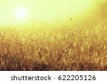 flower grass with sunlight in...   Shutterstock . vector #622205126