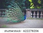 beautiful peacock. male peacock ...