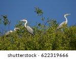 Three Gray Herons Sit On A...