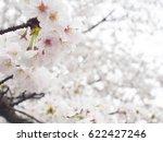cherry blossom   seta   Shutterstock . vector #622427246