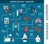 transplantation flowchart... | Shutterstock .eps vector #622490396